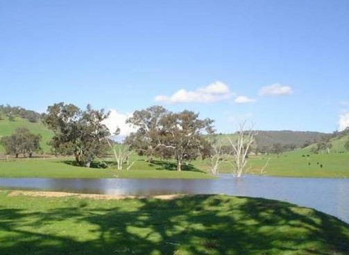 Hillview Farmstay - Accommodation BNB