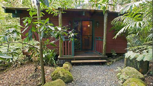 Springbrook Lyrebird Retreat - Accommodation BNB