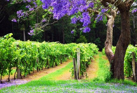 Bago Vineyards - Accommodation BNB