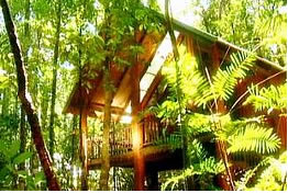The Canopy Treehouses - Accommodation BNB