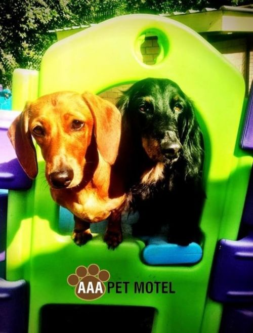 AAA Pet Motel - Accommodation BNB