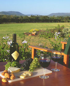Tranquil Vale Vineyard Cottages - Accommodation BNB