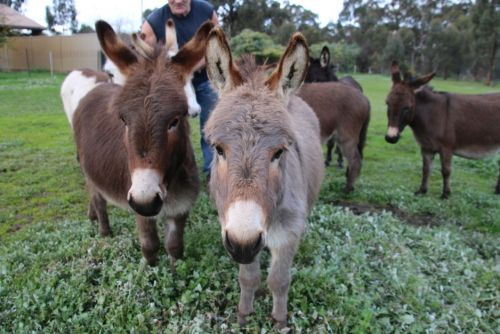 Donkey Tales Farm Cottages - Accommodation BNB