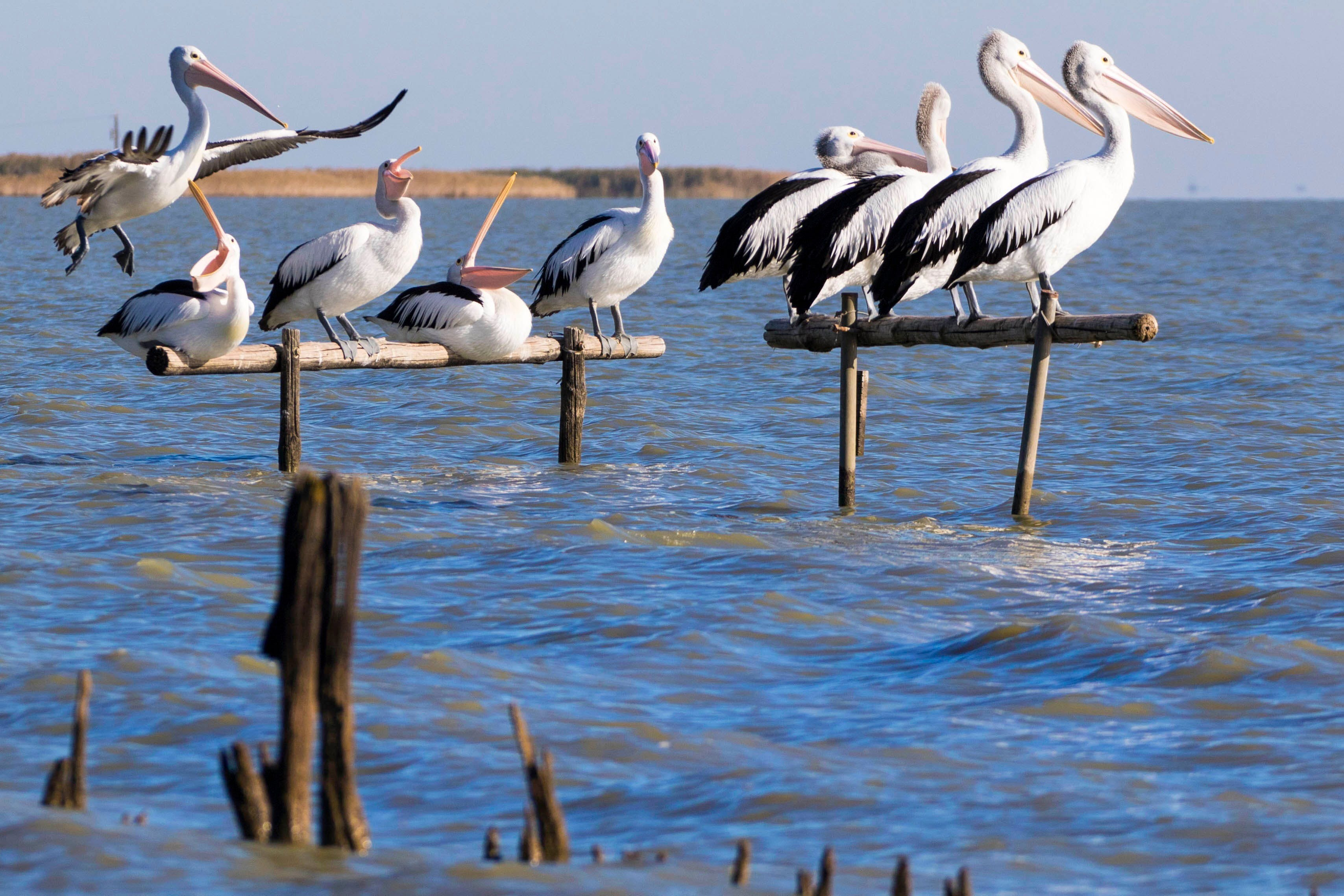 Pelican Perch Retreat - Accommodation BNB