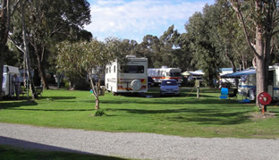 Pinjarra Caravan Park - Accommodation BNB