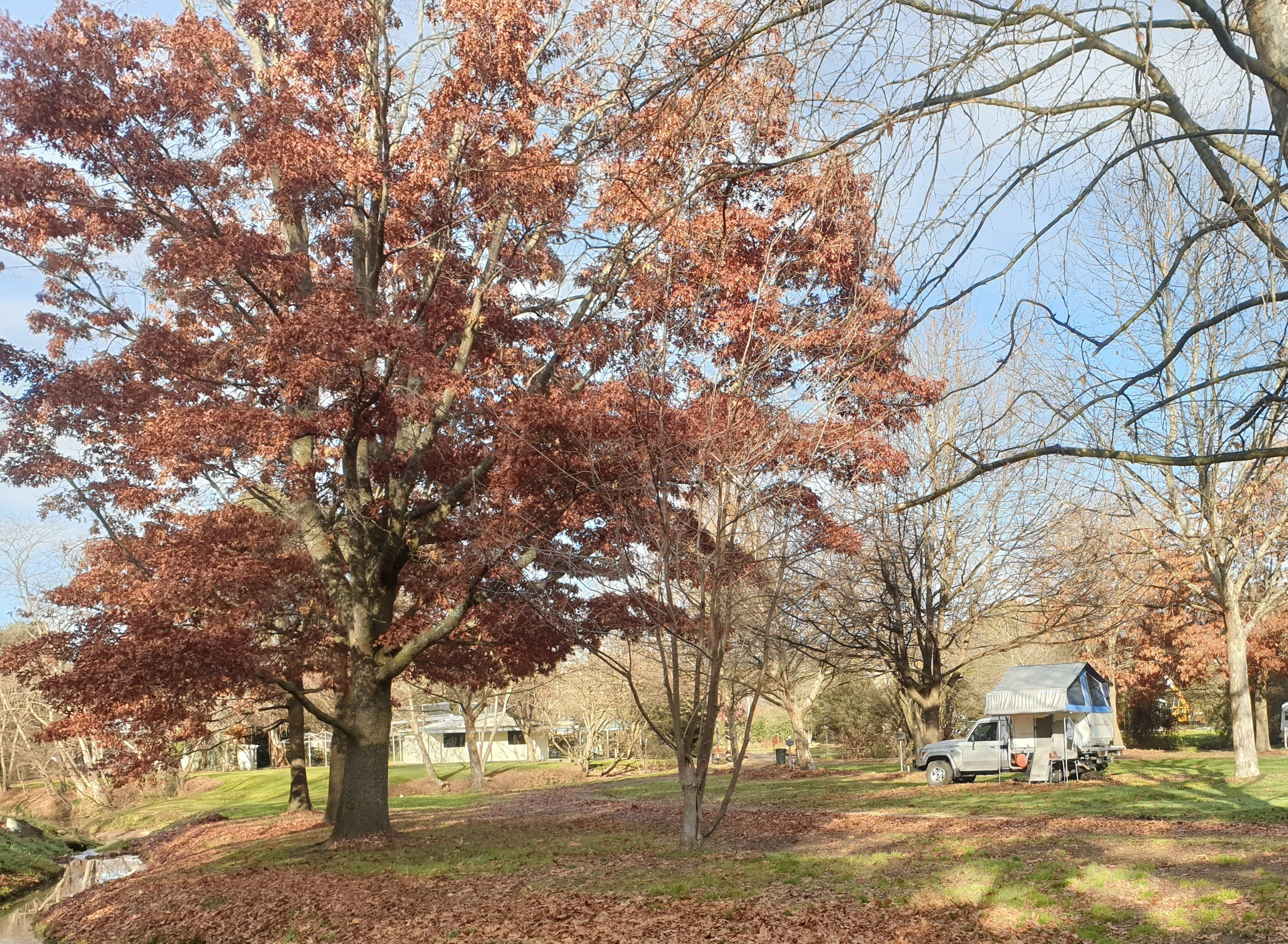Tumbarumba Caravan Park - Accommodation BNB