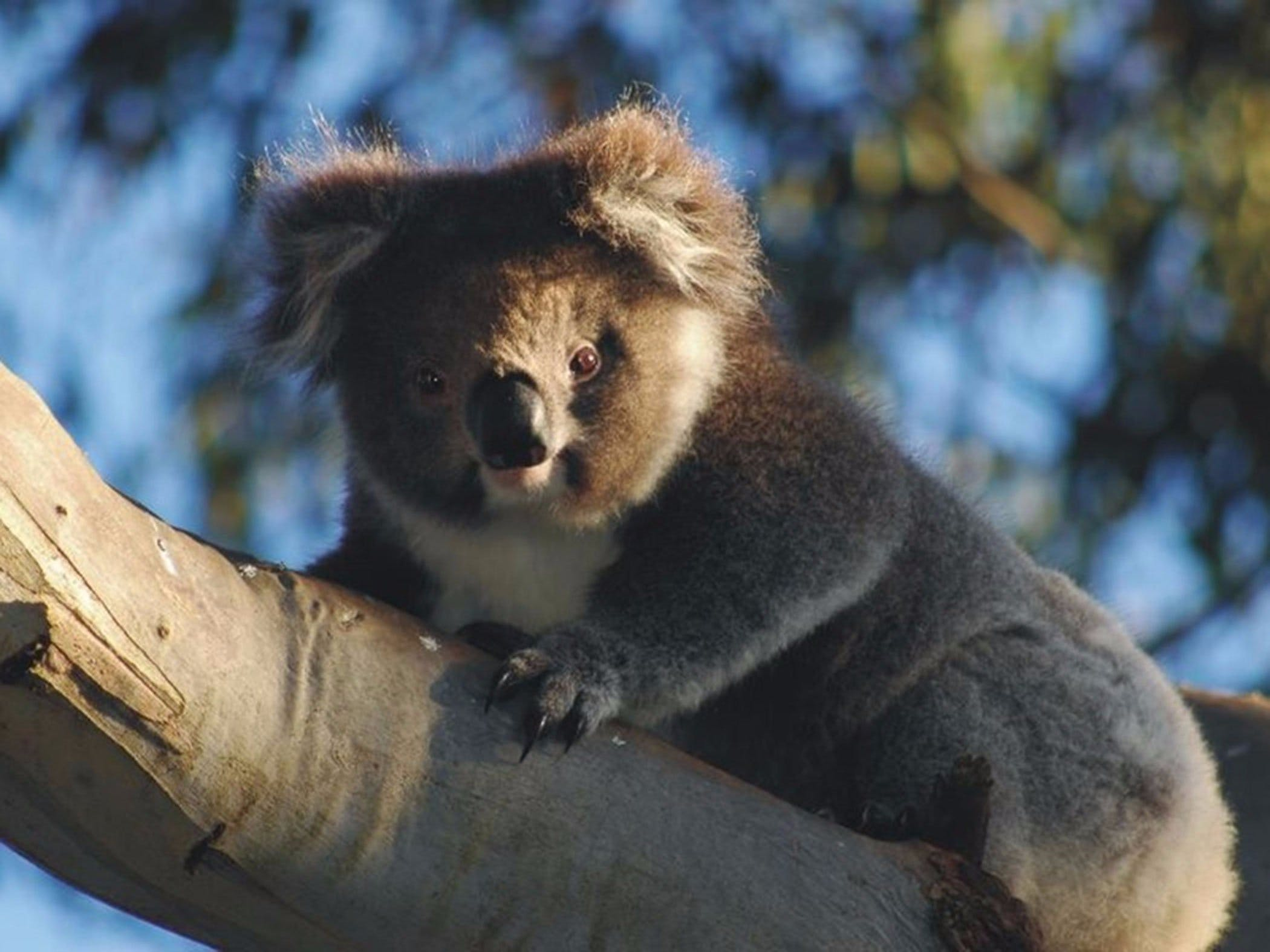 Bimbi Park Camping Under Koalas - Accommodation BNB