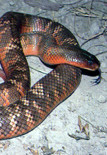 Armadale Reptile  Wildlife Centre - Accommodation BNB