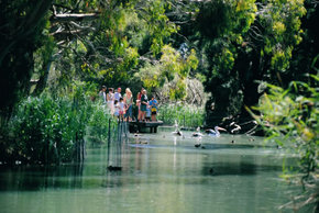 Cleland Wildlife Park - Accommodation BNB