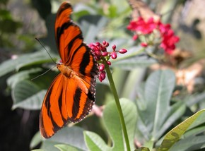 Butterfly Farm - Accommodation BNB