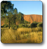 Uluru - Kata Tjuta National Park - Accommodation BNB