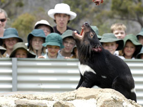 Tasmania Zoo - Accommodation BNB