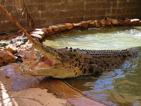 Wyndham Zoological Gardens and Crocodile Park - Accommodation BNB