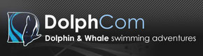 Dolphcom - Dolphin  Whale Swimming Adventures - Accommodation BNB