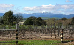 Buller View Wines - Accommodation BNB