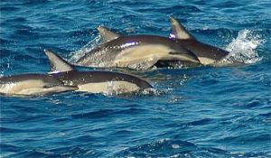 Dolphin Swim Australia - Accommodation BNB