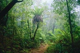 Lamington National Park and OReillys - Accommodation BNB