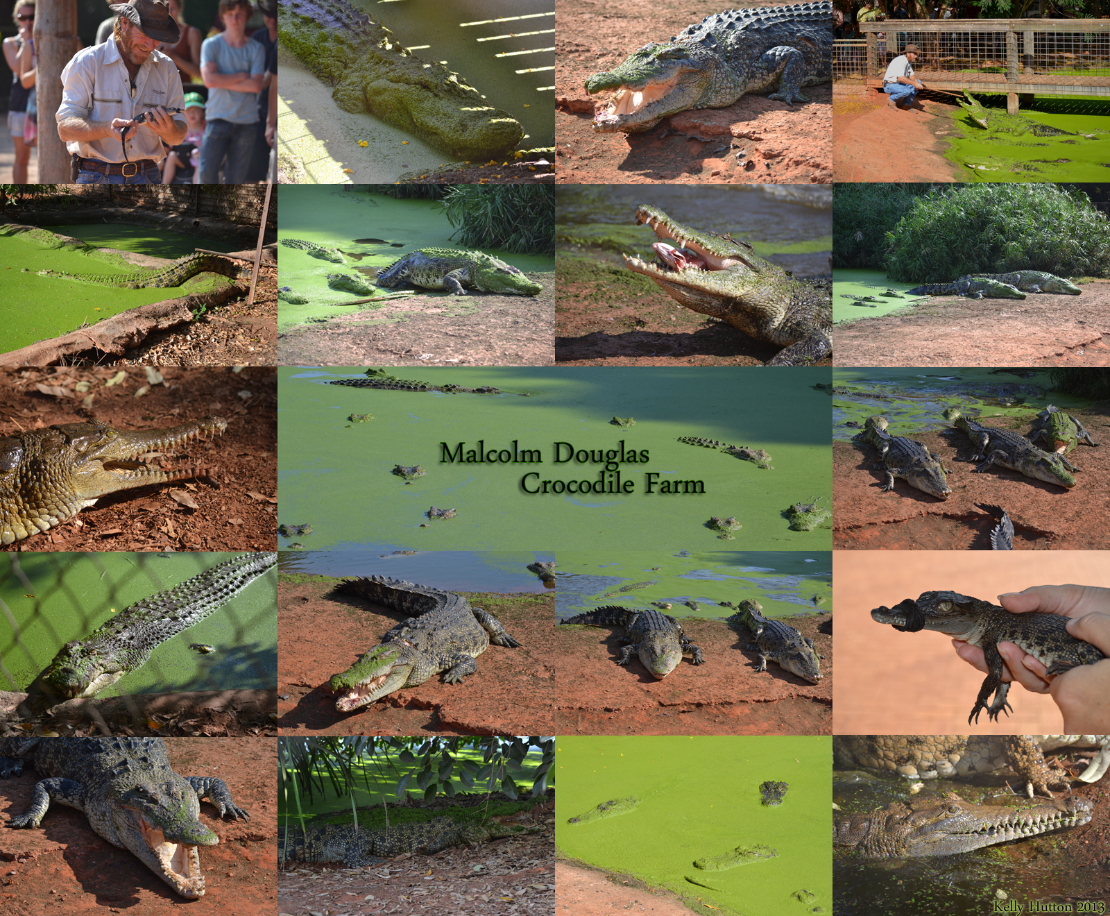 The Malcolm Douglas Crocodile Park - Accommodation BNB