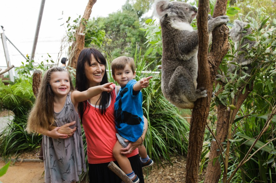 WILD LIFE Sydney Zoo - Accommodation BNB
