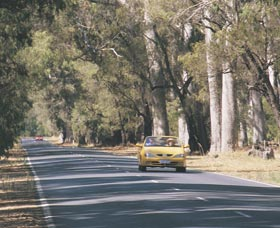 Ludlow Tuart Forest - Accommodation BNB