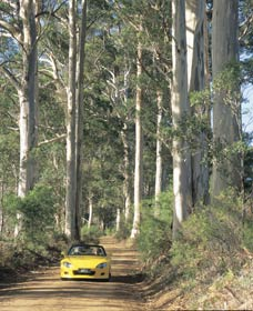 Mount Shadforth Scenic Drive - Accommodation BNB