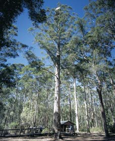 Diamond Tree Lookout Manjimup - Accommodation BNB