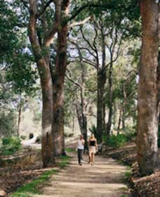 Law Trail and Lotterywest Federation Walkway Kings Park - Accommodation BNB
