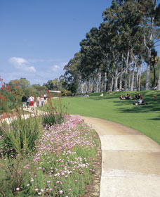 Kings Park Free Guided Walks - Accommodation BNB