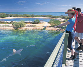 Shark Bay Marine Park - Accommodation BNB
