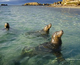 Shoalwater Islands Marine Park - Accommodation BNB