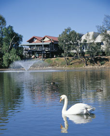 White Swans - Accommodation BNB
