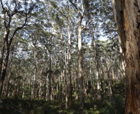 Boranup Karri Forest - Accommodation BNB