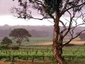 Yangarra Estate Vineyard - Accommodation BNB