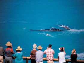 Whale Watching At Head Of Bight - Accommodation BNB
