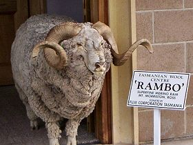 Tasmanian Wool Centre - Accommodation BNB