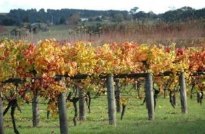 Apsley Gorge Vineyard - Accommodation BNB