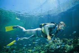 Kirra Reef Dive Site - Accommodation BNB
