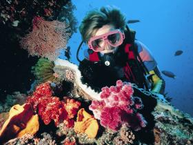 Nine Mile Reef Dive Site - Accommodation BNB