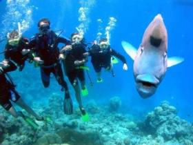 Jew Shoal Dive Site - Accommodation BNB