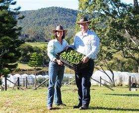 Hinterland Feijoas - Accommodation BNB