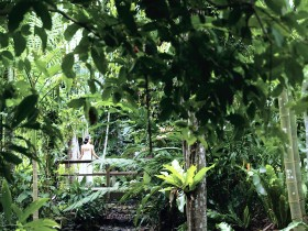 Flecker Botanic Gardens - Accommodation BNB