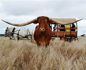 Texas Longhorn Wagon Tours and Safaris - Accommodation BNB