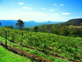 Preston Peak Wines - Accommodation BNB