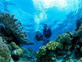Coral Gardens Dive Site - Accommodation BNB