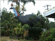 The Big Cassowary - Accommodation BNB