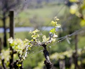 Norton Estate Wines - Accommodation BNB
