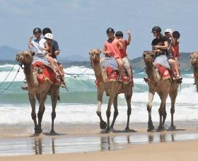 Camel Rides with Coffs Coast Camels - Accommodation BNB