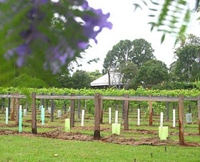 Douglas Vale Historic Homestead  Vineyard - Accommodation BNB