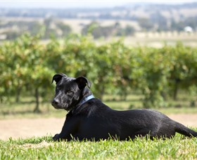 Moothi Estate Vineyard and Cellar Door - Accommodation BNB