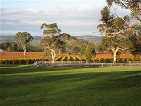 Top Note Vineyard - Accommodation BNB